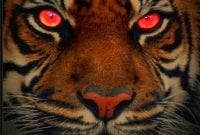 Cerita Legenda 7 Manusia Harimau Dalam Bahasa Inggris Dan Artinya