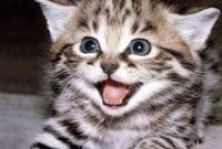 Contoh Descriptive Text About My Cat Dan Artinya