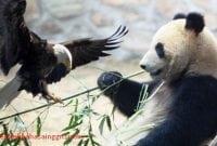 2 Contoh Report Text Tentang Binatang Beserta Artinya