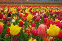 Kumpulan Nama Bunga Dalam Bahasa Inggris Beserta Gambar Dan Artinya