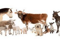 """Kumpulan """"Farm Animal"""" Dalam Bahasa Inggris Beserta Arti"""