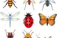 Kumpulan Nama Insects (Serangga) Dalam Bahasa Inggris Beserta Arti